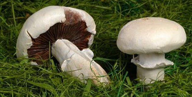 How to get over a bad mushroom trip