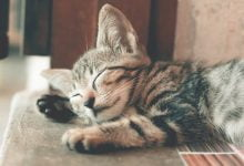 Photo of How To Get Over A Lost Cat 2021 – Avoid These Mistakes And Be Your Pet Again