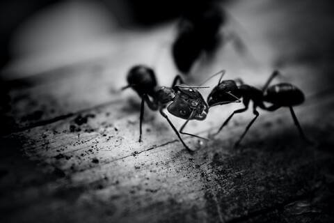 get over the fear of ants