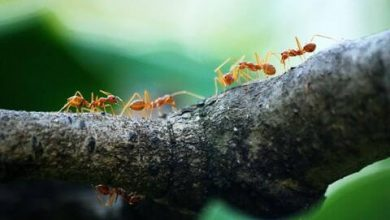 Photo of Tips on How to Get Over The Fear of Ants – Easy 3 Way